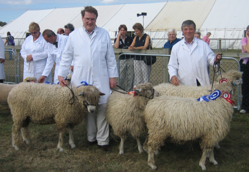 Cotswold winners at Newbury Show